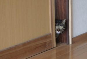 大久保さんの家の猫ちゃん